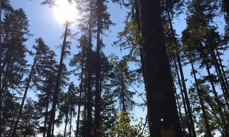 McDonald Forest